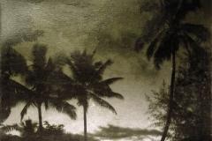 Hanalei Palms